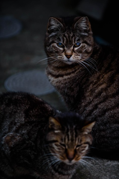 Cats on Enoshima Island, home of the 2020 Summer Japan Olympic sailing events
